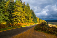 Autumn at Westerton Aberdeenshire Scotland. Autumn scenery on a country road near Westerton Aberdeenshire Royalty Free Stock Photography