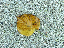 Autumn wet leaf on the small pebbles Royalty Free Stock Photo