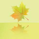 Autumn wet maple leaf. Stock Photos