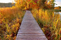 Autumn Wetlands Stock Photography