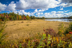 Autumn  Wetlands Royalty Free Stock Photography
