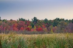 Autumn wetlands and trees Royalty Free Stock Photos