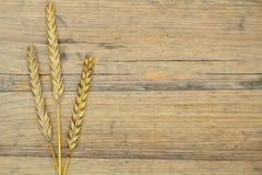 Autumn wheat on old wood texture Stock Photo
