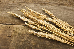 Autumn wheat Stock Image
