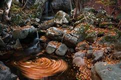 Autumn whirl Stock Photos