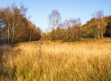 Autumn white coppice grasses Stock Image