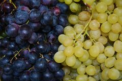 Autumn white and violet grapes background Royalty Free Stock Image