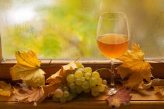 Autumn white wine Stock Images