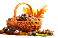 Autumn wicker basket Royalty Free Stock Images