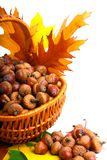 Autumn wicker basket Stock Photo