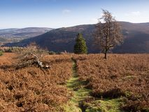 Autumn in Wicklow mountains, Ireland Royalty Free Stock Photography