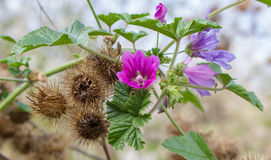 AUTUMN WILD FLOWERS Stock Images