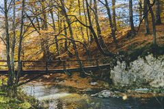Autumn into the wild forest. Autumn into the forest with a beautiful bridge over a clean and cold water Stock Photo
