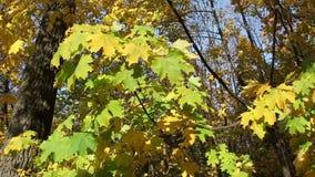 Autumn in wild forest stock footage
