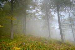 Autumn wild forest Royalty Free Stock Image