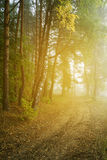 Autumn in a wild forest. Stock Photography
