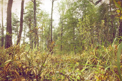 Autumn in a wild forest. Royalty Free Stock Photography