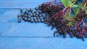 Autumn wild fruits, elder berries and sloes Royalty Free Stock Photography