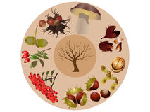 Autumn wild fruits Royalty Free Stock Images