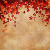 Autumn wild grapes leaves background Stock Images