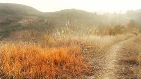 Autumn in Wild mountain Royalty Free Stock Image