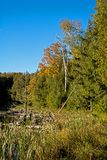 Autumn Wilderness Scene In Ontario, Canada immagine stock libera da diritti