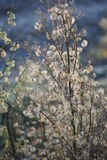 Autumn Wildflowers Royaltyfria Bilder