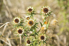Autumn wildflowers on a background of dry grass. Royalty Free Stock Images