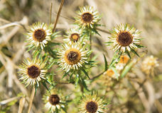 Autumn wildflowers on a background of dry grass. Royalty Free Stock Image