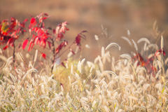 Autumn wildflowers Royalty Free Stock Photography