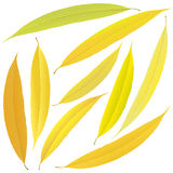 Autumn willow leaves Royalty Free Stock Photos
