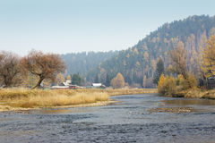 Autumn willow by the river. Colorful trees. Siberian forest. Stock Image