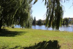 Autumn willow stand on the lake. Sunny day stock images