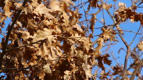 Autumn wind Royalty Free Stock Images