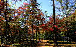 Autumn wind of the red mountain Royalty Free Stock Photo
