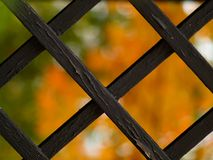 Autumn window Stock Images