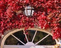 Autumn window Stock Photography