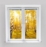 Autumn window Stock Image