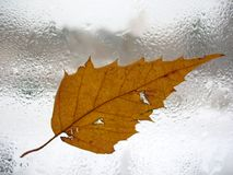 Autumn window glass and rain drops Royalty Free Stock Images