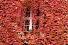 Autumn window, Heidelberg, Germany Stock Images