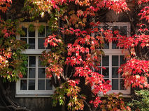 Autumn windows Royalty Free Stock Image