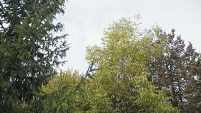 Autumn windy park in 4K stock video footage