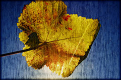 Autumn wine leaf Royalty Free Stock Photos