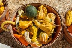 Autumn Wings Gourds Fotos de Stock