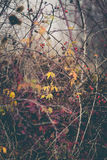 Autumn winter background with branches and leaves Stock Photo