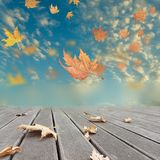 Autumn winter background leaves wind weather Stock Photo