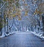 Autumn winter boulevard royalty free stock image