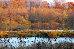 Autumn and winter clad landscape. At the lake in November Royalty Free Stock Images