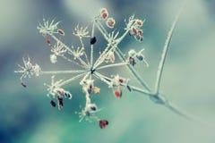 Autumn Winter Colors Gefrorener ausgetrockneter Betriebskerbelwald in den Herbstlichtfarben und in den Makroschüssen Stockfotos
