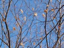Autumn-Winter Stock Photography